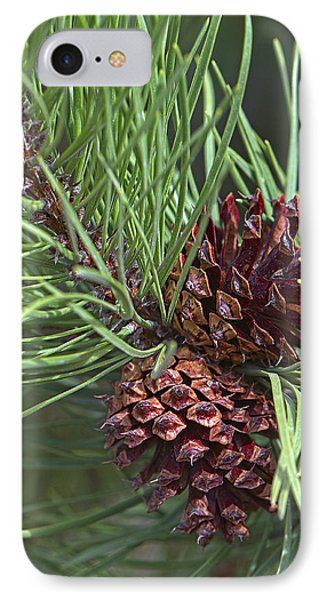 Ponderosa Pine Cones IPhone Case by Sharon Talson
