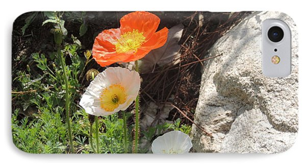 Poppies In The Sun IPhone Case by Helen Carson