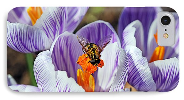 IPhone Case featuring the photograph Popping Spring Crocus by Debbie Oppermann