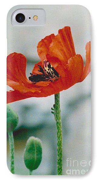 Poppy - 1 IPhone Case by Jackie Mueller-Jones