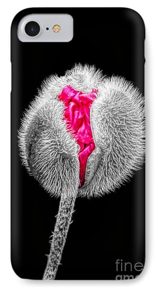 Poppy Emerging IPhone Case by Lynn Bolt
