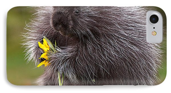 Porcupine With Arrowleaf Balsamroot Phone Case by Jerry Fornarotto