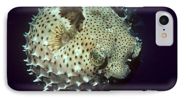 Porcupinefish IPhone Case
