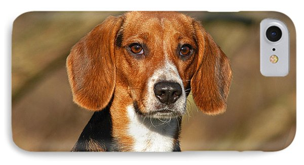 Portrait Beagle Dog IPhone Case by Dog Photos