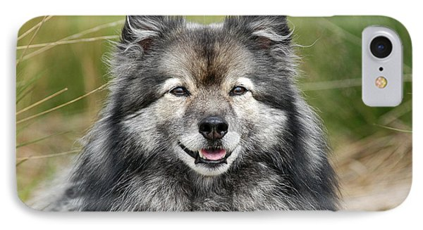 Portrait Grey Keeshond Dog IPhone Case by Dog Photos