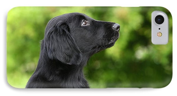 Portrait Head Black Flat Coated Retriever Puppy IPhone Case by Dog Photos