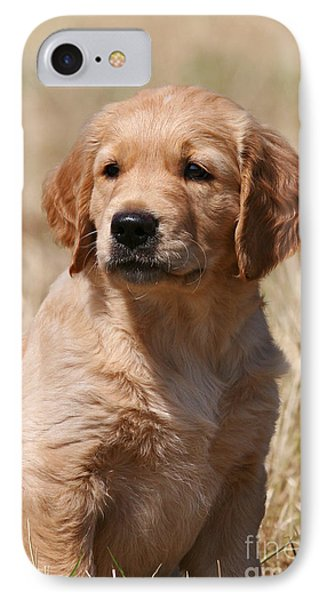 Portrait Head Golden Retriever Puppy IPhone Case by Dog Photos