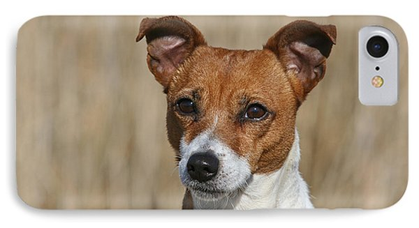 Portrait Jack Russell Terrier Dog IPhone Case by Dog Photos