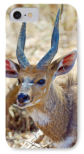 Portrait Of A Bushbuck In Kruger National Park-south Africa  IPhone Case