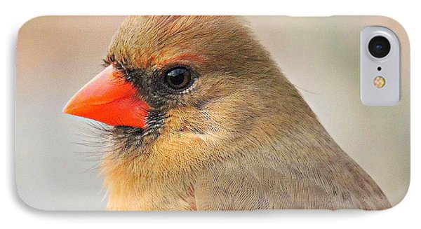 Portrait Of A Cardinal IPhone Case by Eve Spring