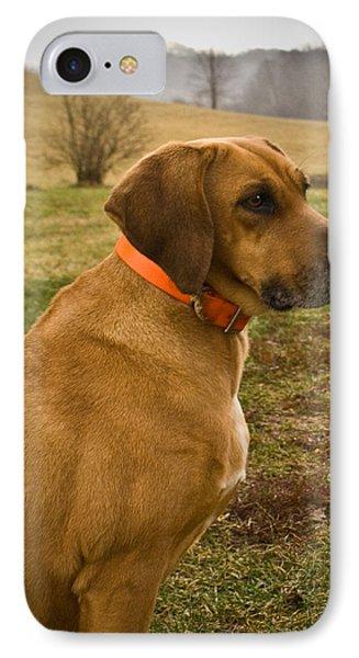 Portrait Of A Dog IPhone Case by Douglas Barnett