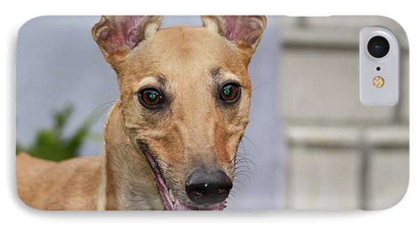 Portrait Of A Greyhound IPhone Case by Zandria Muench Beraldo