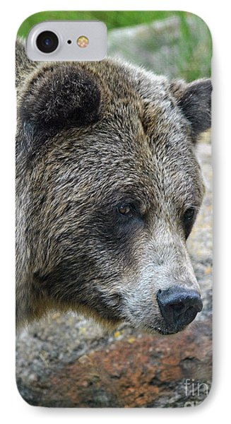Portrait Of A Grizzly Bear IPhone Case by Jim Fitzpatrick