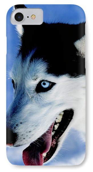 Portrait Of A Husky, Santa Fe, New IPhone Case by Julien Mcroberts