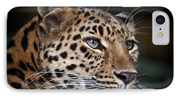 Portrait Of A Leopard IPhone Case by Chris Boulton