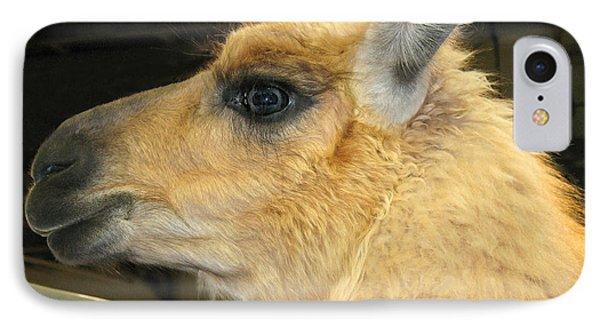 Portrait Of A Llama IPhone Case by Connie Fox