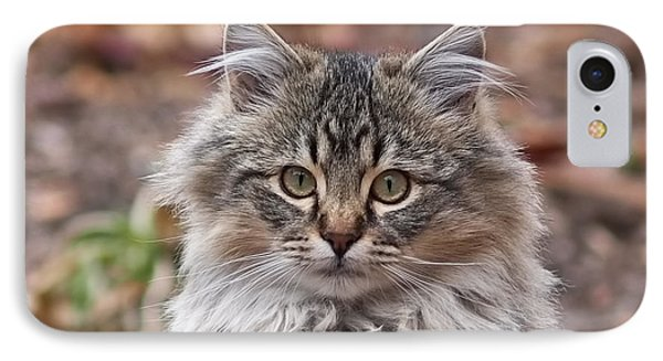 Portrait Of A Maine Coon Kitten IPhone Case by Rona Black