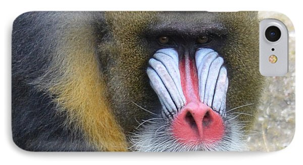 Portrait Of A Mandrill IPhone Case by Jim Fitzpatrick