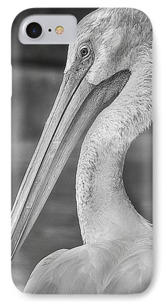 Portrait Of A Pelican IPhone Case by Jon Woodhams