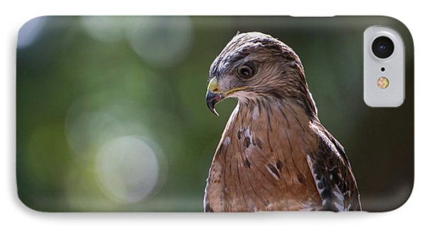 Portrait Of A Perched Hawk With Intense IPhone Case