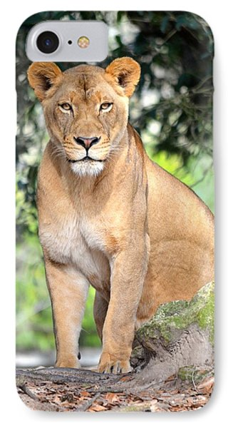 Portrait Of A Proud Lioness IPhone Case by Richard Bryce and Family