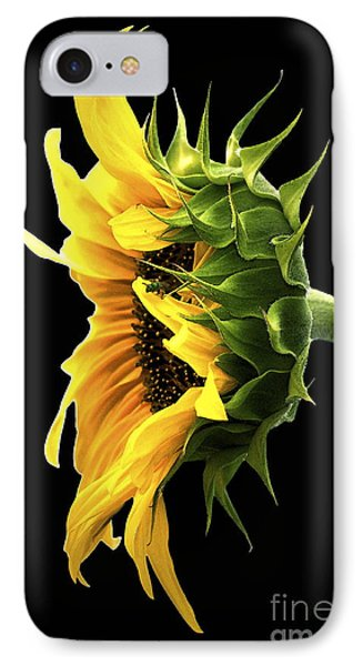 Portrait Of A Sunflower IPhone Case by Gwyn Newcombe