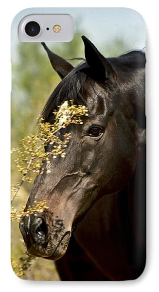 Portrait Of A Thoroughbred IPhone Case by Kathy McClure