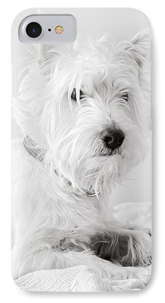 Portrait Of A Westie IPhone Case by Edward Fielding