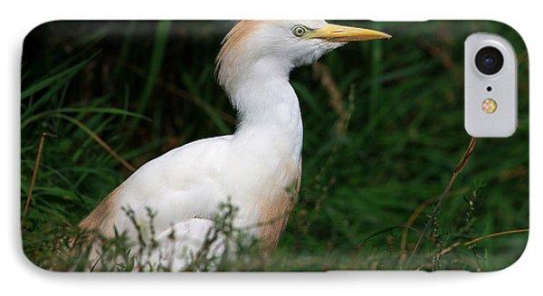 Portrait Of A White Egret IPhone Case