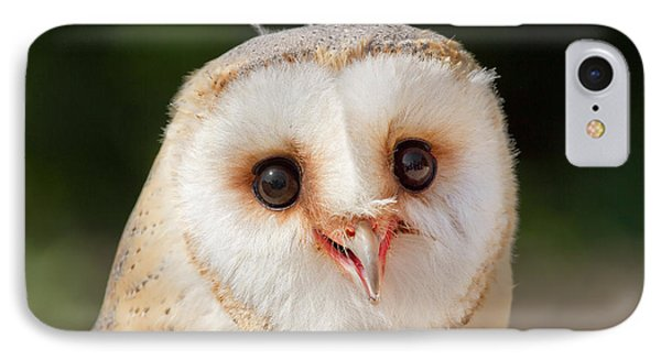 Portrait Of A Young Barn Owl IPhone Case