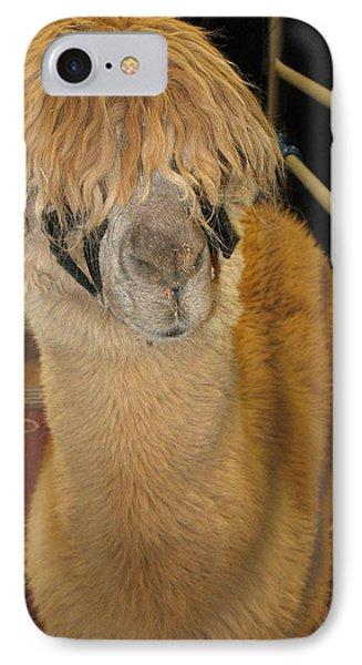 Portrait Of An Alpaca IPhone Case by Connie Fox