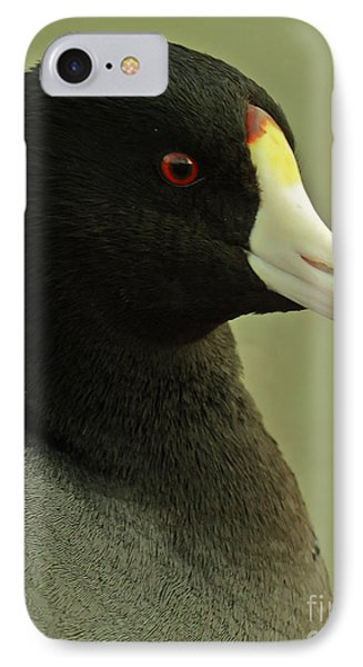 Portrait Of An American Coot Phone Case by Robert Frederick