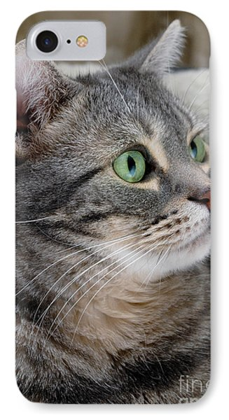 Portrait Of An Ameriican Shorthair Cat IPhone Case by Amy Cicconi