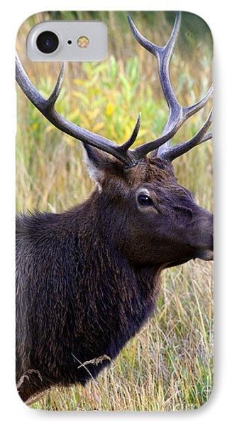 Portrait Of An Elk IPhone Case