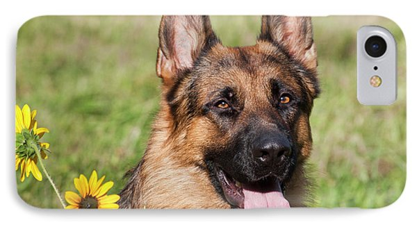 Portrait Of German Shepherd Sitting IPhone Case by Zandria Muench Beraldo