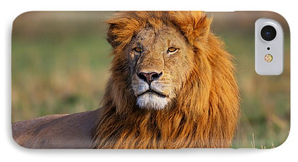 Portrait Of Lion Romeo II In Masai Mara Phone Case by Maggy Meyer