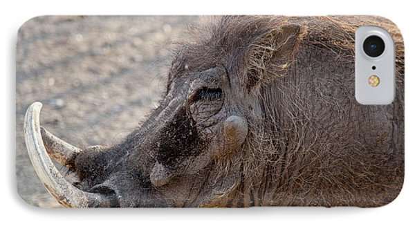 Portrait Of Old Warthog (phacochoerus IPhone Case by Jaynes Gallery