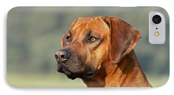 Portrait Rhodesian Ridgeback Dog IPhone Case by Dog Photos
