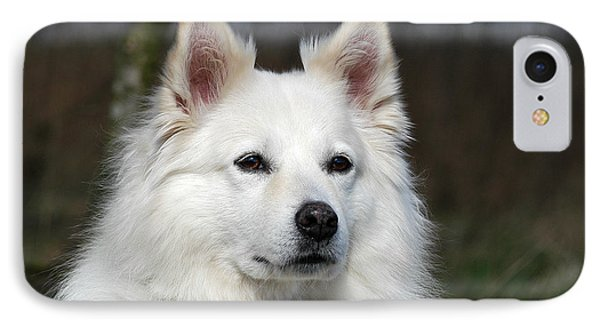 Portrait White Samoyed Dog IPhone Case by Dog Photos