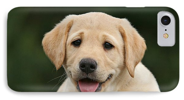 Portrait Yellow Labrador Retriever Puppy IPhone Case by Dog Photos