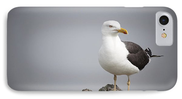 Posed Gull Phone Case by Anne Gilbert