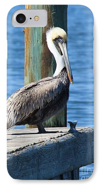 Posing Pelican IPhone Case by Carol Groenen