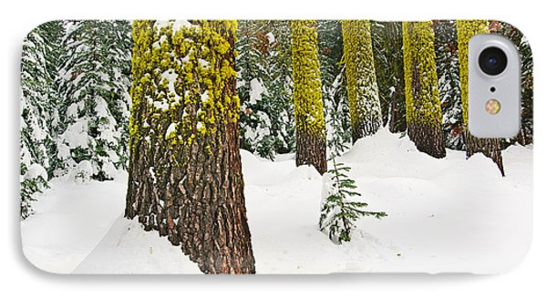 Potential - Winter Scene Of Badger Pass In Yosemite National Park IPhone Case by Jamie Pham