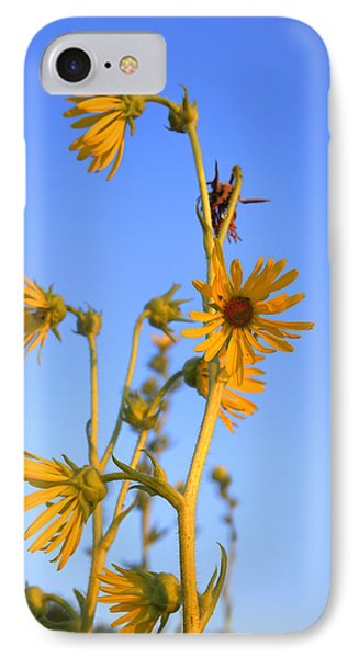 Prairie Compass Plant IPhone Case