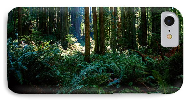 Prairie Creek Redwoods State Park 10 IPhone Case