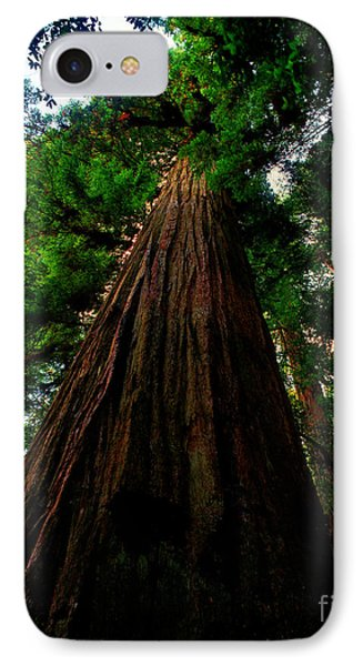 Prairie Creek Redwoods State Park 13 IPhone Case