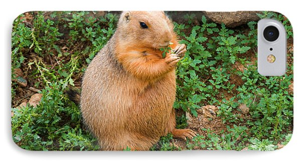 Prairie Dog Eats Vegetation IPhone Case