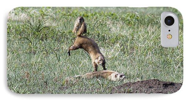 Prairie Dog Ferret Fight IPhone Case