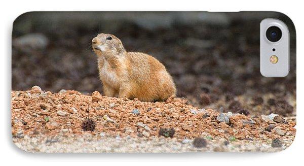 Prairie Dog On Alert  IPhone Case