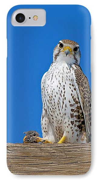 Prairie Falcon With Mouse IPhone Case by Stephen  Johnson